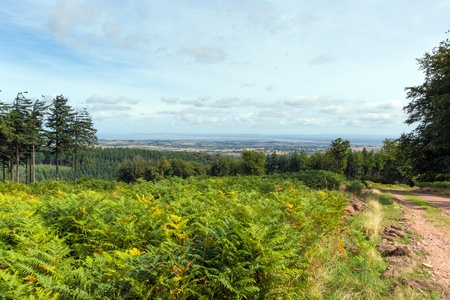 quantock hills: Path on Quantock Hills Somerset England with views towards Bristol Channel Stock Photo