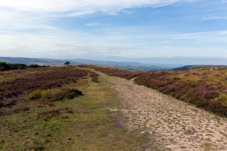quantock hills: Quantock Hills Somerset England with purple heather