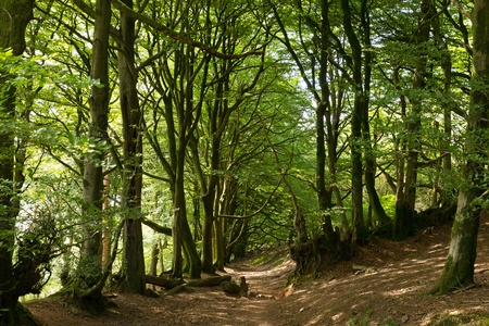 Wooded area and trees on Quantock Hills Somerset England