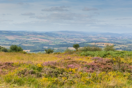 quantock hills: View from Quantock Hills Somerset England with purple heather