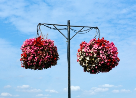 Two hanging baskets of bergonias with blue sky and white clouds photo