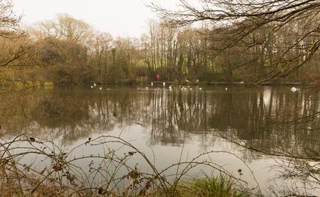 country park: Tehidy Country Park Cornwall Inglaterra Reino Unido cerca de Camborne y Redruth con bosques y lagos popular atracci�n tur�stica