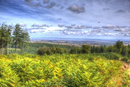 quantock hills: View from Quantock Hills Somerset with trees and ferns in colourful HDR towards Bristol Channel Stock Photo