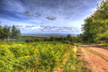 View from Quantock Hills Somerset with trees and ferns in colourful HDR towards Bristol Channel Stock Photo