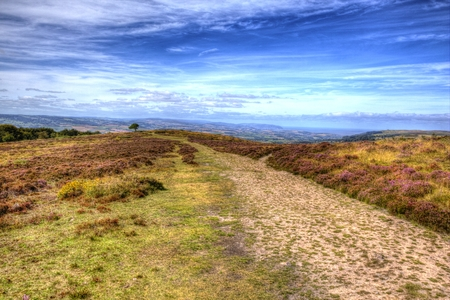 quantock hills: View on top of Quantock Hills Somerset England with purple heather in colourful HDR towards Bristol Channel
