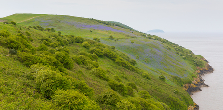 brean: Bluebells growing on Brean Down Somerset in the spring Stock Photo