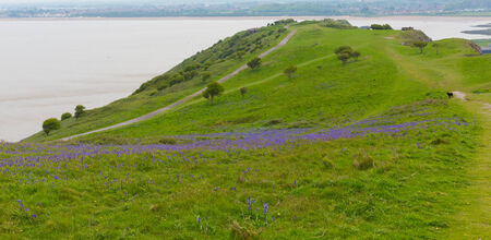 brean: Bluebells Brean Down Somerset in the spring Stock Photo