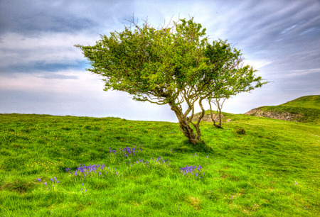 brean down: Tree and bluebells in vivid colourful HDR