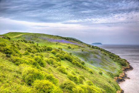 brean down: Bluebells Brean Down Somerset in spring in colourful HDR