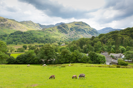 borrowdale: Lake District country scene Seatoller Borrowdale Valley Cumbria England UK