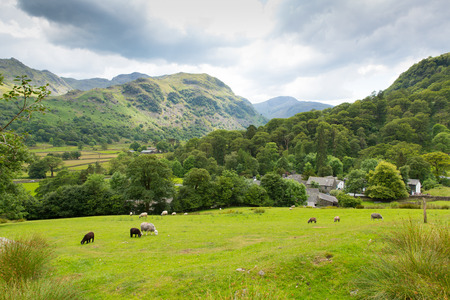 borrowdale: Country scene of sheep in a field at Seatoller Borrowdale Valley Lake District Cumbria England UK Stock Photo