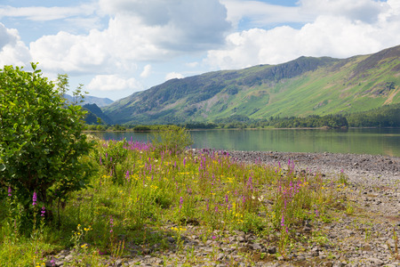 Lake District mountains and pink flowers Maiden Moor Derwent Water
