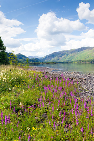Lake District mountains and pink flowers Maiden Moor Derwent Water  photo