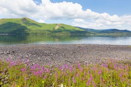 borrowdale: Lake District mountains and pink flowers Maiden Moor Derwent Water