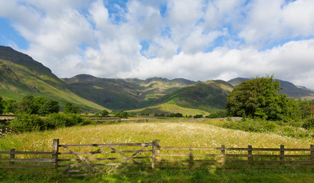 langdale pikes: Daisy field with mountains blue sky and clouds scenic Langdale Valley Lake District Cumbria near Old Dungeon Ghyll England UK in summer Stock Photo