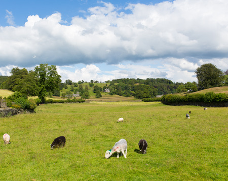 Near Sawrey country view by Hawkshead Lake District former village home to Beatrix Potter Stock Photo