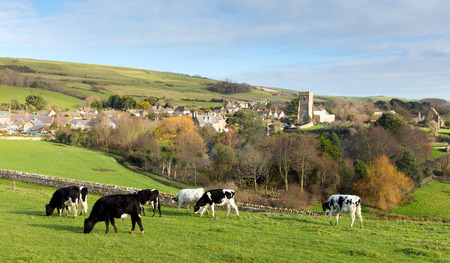 old english: Dorset village of Abbotsbury England UK known for its swannery, subtropical gardens and historic stone buildings on the Jurassic Coast