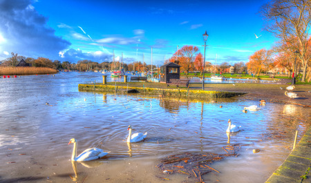 bright colour: River Stour Christchurch Dorset England UK with swans swimming on a calm peaceful day like painting in vivid bright colour HDR