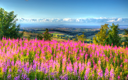 english west country: Quantock Hills Somerset England UK countryside views towards Hinkley Point Nuclear Power station and Bristol Channel on a summer evening from Cothelstone hill with pink flowers Stock Photo