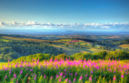 english west country: Somerset countryside Quantock Hills England UK countryside views towards Hinkley Point Nuclear Power station and Bristol Channel on a summer evening from Cothelstone hill with pink flowers Stock Photo