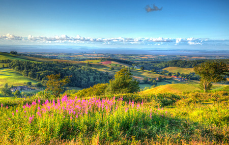 hill station tree: Quantock Hills Somerset England UK countryside views towards Hinkley Point Nuclear Power station and Bristol Channel on a summer evening from Cothelstone hill with pink flowers Stock Photo
