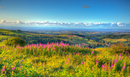 english west country: English countryside scene Quantock Hills Somerset England UK countryside views towards Hinkley Point Nuclear Power station and Bristol Channel on a summer evening from Cothelstone hill with pink flowers