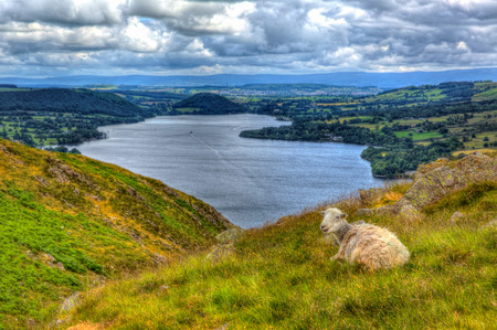 cumbria: The Lake District Cumbria England UK sheep with elevated view of Ullswater in the English countryside in hdr Stock Photo