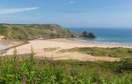cymru: Three Cliffs Bay south coast the Gower Peninsula Swansea Wales uk with pink flowers near to Oxwich
