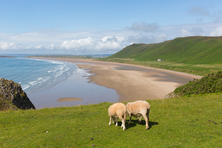 bristol channel: Rossili beach The Gower South Wales UK with sheep grazing and overlooking the bay at this popular Welsh holiday destination Stock Photo