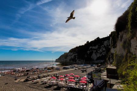jurassic coast: Seagull at Beer Devon England UK English coastal village on the Jurassic Coast a World Heritage Site