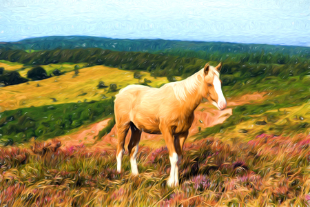 quantock hills: Beautiful blonde dun cream pony with a white nose on an English hillside with purple heather Stock Photo