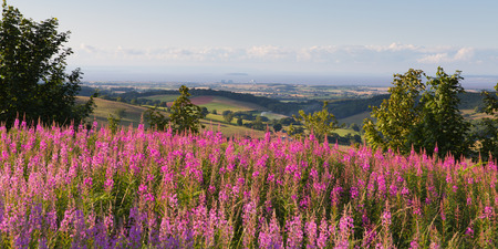 quantock hills: Hinkley Point with pink flowers from Quantock Hills England UK countryside views towards the Nuclear Power station and Bristol Channel on a summer evening