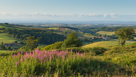 english west country: Quantock Hills Somerset England UK countryside views towards Hinkley Point Nuclear Power station and Bristol Channel on a summer evening Cothelstone hill with pink flowers Stock Photo