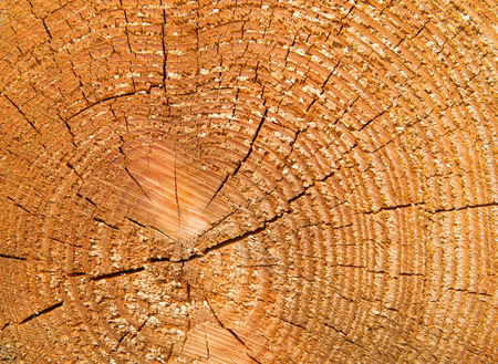 sawn: Sawn tree log with concentric circles showing its age in years background texture Stock Photo