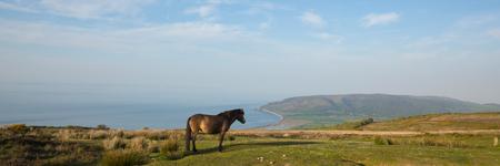Exmoor national park view with pony towards Porlock Somerset coast panoramic view