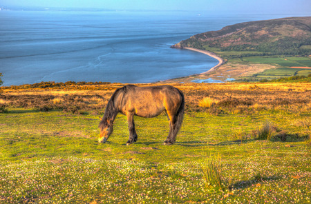 English coastal scene in Exmoor national park view with pony towards Porlock Somerset in hdr Stock Photo