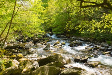 lynmouth: Beautiful Devon River Lyn near Lynmouth Devon on walk to Watersmeet