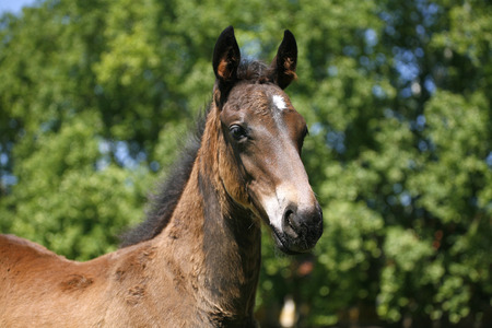 Portrait of a pretty foal in summer pasture photo