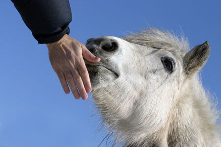 caresses:  Hand that caresses the pony in summer time