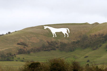 anglo saxon:  Westbury White Horse in Wiltshire England    White chalk horse on hillside in wiltshire england           Stock Photo