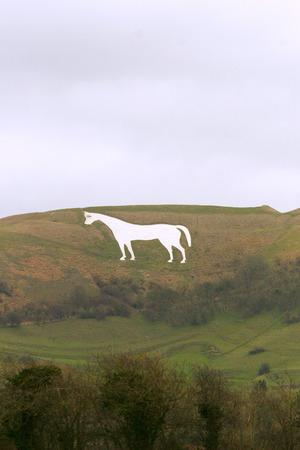 Westbury White Horse in Wiltshire England     White chalk horse on hillside in wiltshire england