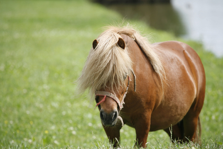 oal: Close up of a pony horse rural scene Stock Photo
