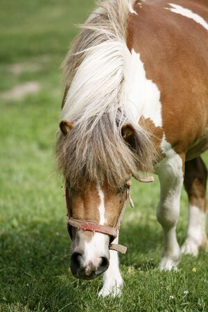 Close up of a pony horse rural scene Stock Photo