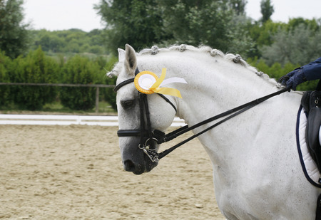 the first prize: First prize rosette in a grey colored dressage horses head