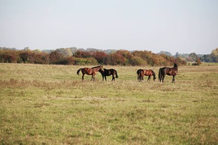 mare and foal: Mare and her foal grazing in the meadows rural scene