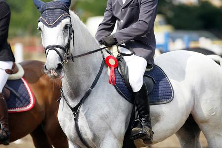 기 수와 장미와 아름 다운 회색 조 마 말의 측면보기 초상화