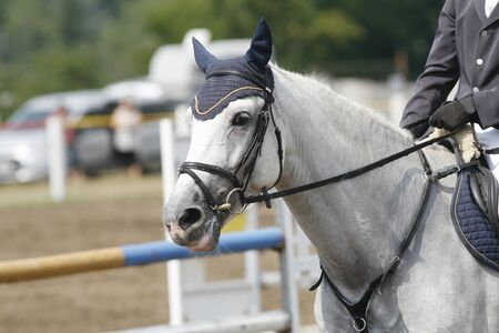 horse chestnuts: Face of a beautiful purebred racehorse on the jumping competition