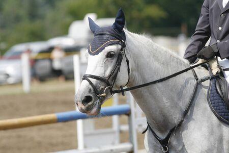 cavallo in corsa: Volto di una bella cavallo da corsa purosangue sulla gara di salto Archivio Fotografico