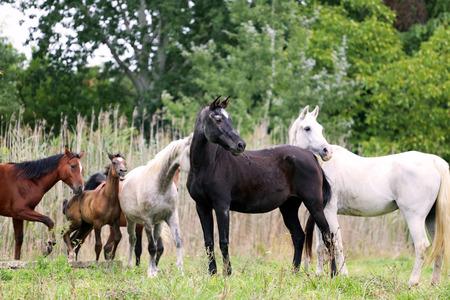 beautifu: Beautifu mares and foals  standing on pasture rural scene
