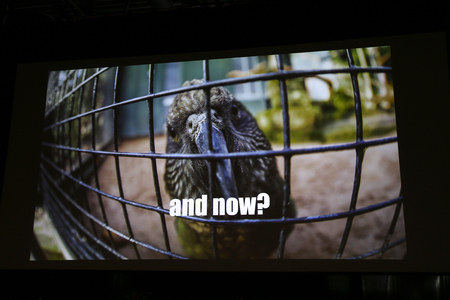 spokesman: Sad parrot in a cage projecting on the wall Stock Photo